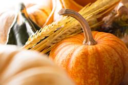 Pumpkin and Wheat Harvest