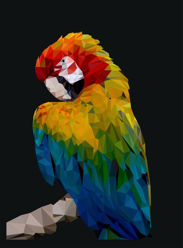 Parrot coloured.jpg
