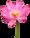 flor 4.png