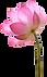 flor 3.png