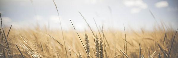 agriculture-1845835_1920.jpg