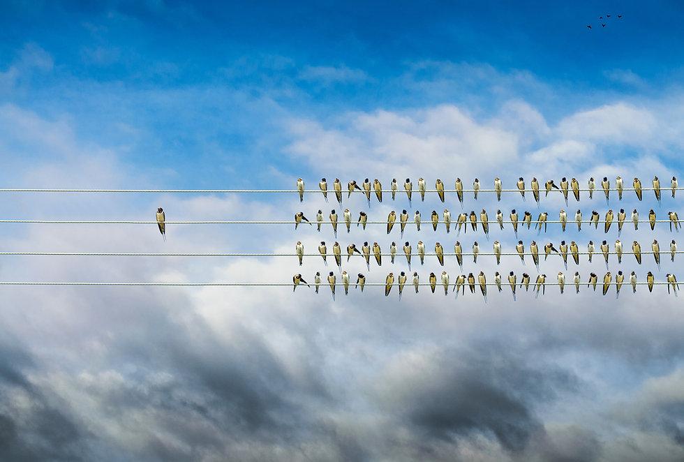birds on a wire-2.jpg