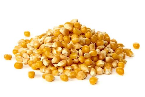 Maíz en grano