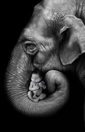 Newborn and Elephant Photo session Perth