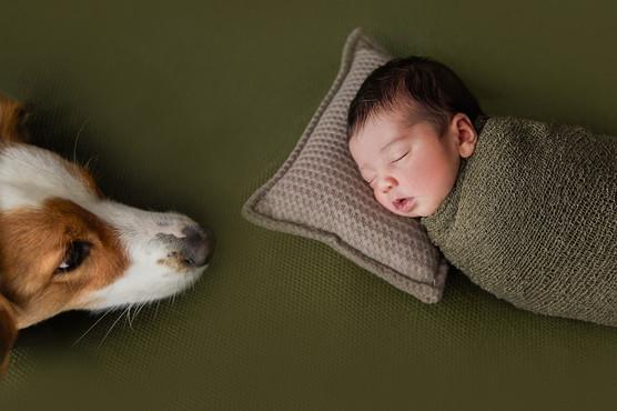 Newborn and dog session
