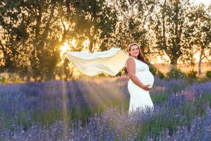 Pregnancy Photography Lavender Perth