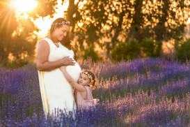 Maternity Lavender field Perth