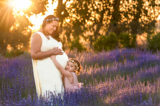 Maternity Lavender field Perth