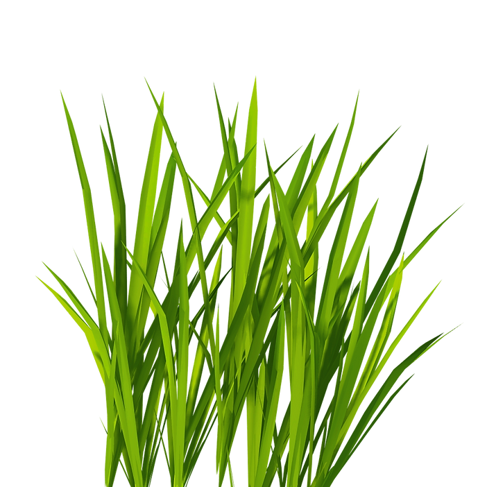 9-grass-png-image-green-grass-png-pictur