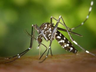 कोरोना संक्रमण के बीच डेंगू का बढ़ा खतरा, DMCH में भर्ती हुआ डेंगू का पहला मरीज।