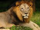 कोरोना का डेल्टा वैरिएंट पहुंचा भारत, चार शेरों में इसकी पुष्टि।