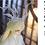 Thumbnail: Dragon Horn by W.S.Studio