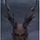 Thumbnail: Black Dragon