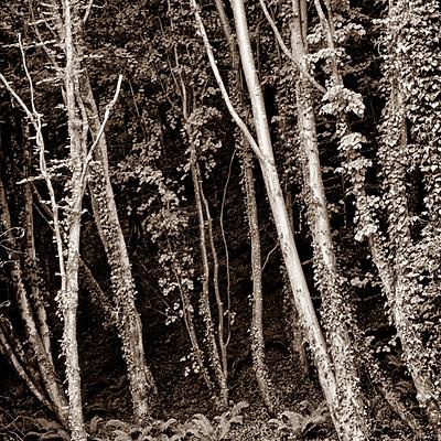 Images by Derek W