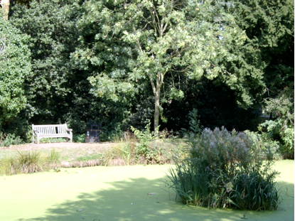 Theydon Grove Pond.png
