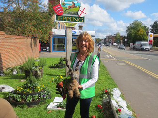 Epping in Bloom plant Tower Road green for winter