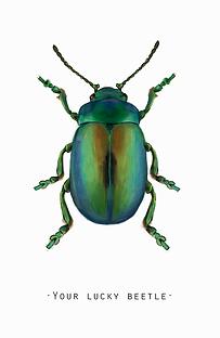 Beetle escarabajo lucky ilustración cientifica