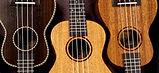 ukulele-2205860_1920.jpg
