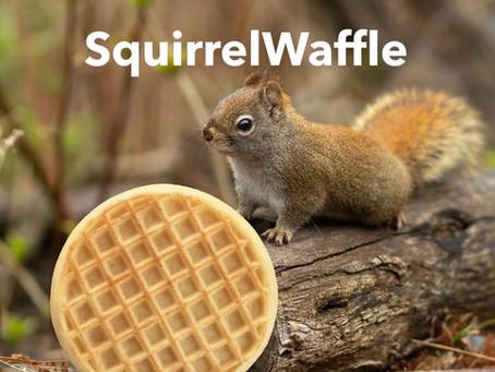 Analyzing SquirrelWaffle With Gigasheet