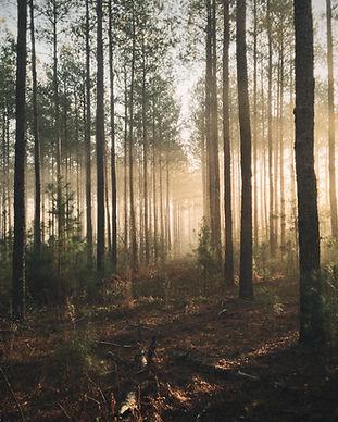 Illuminated%20woods_edited.jpg