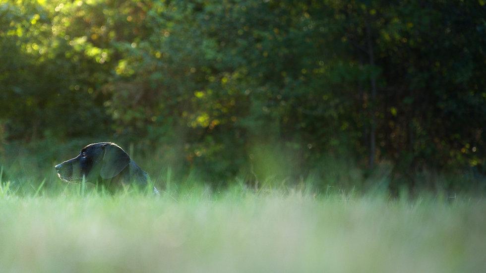 Chien dans l'herbe allongé lors d'une séance d'éducation canine et comportement avec Kevin Moulaï