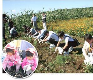 ジャガイモ掘りとり体験