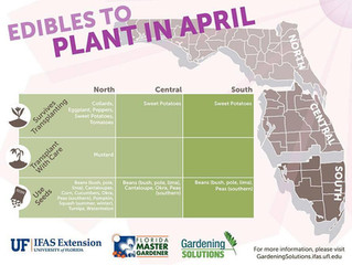 Edible Plants to Plant in April