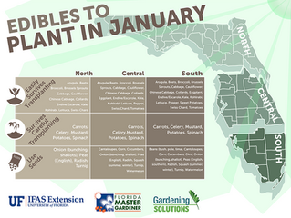 Edibles Plants to plant in January