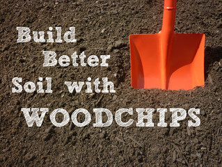 Building Better Soil with Woodchips