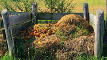 Compost Pile Quick Tips
