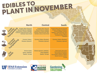 Edibles Plants to plant in November