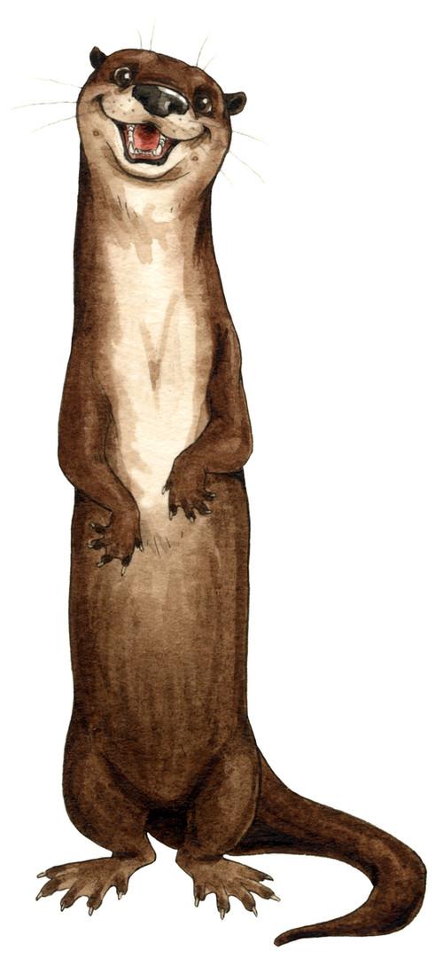 Tidbit the Otter