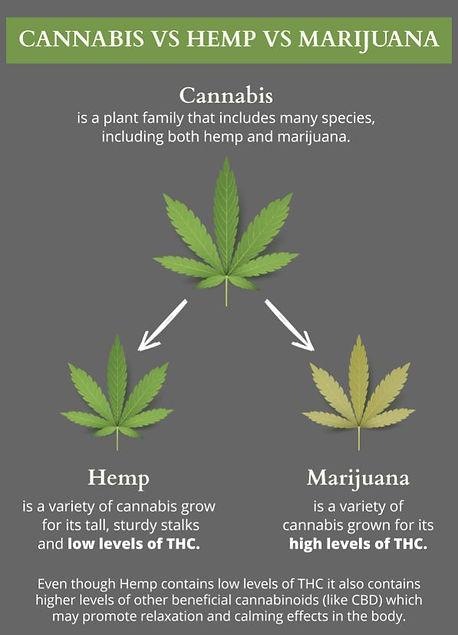 Cannabis vs hemp.jpg