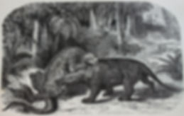 Iguanodon_versus_Megalosaurus.jpg