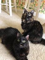 Herb cats.jpg