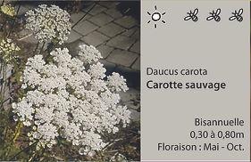 ET carotte.jpg