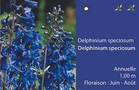 ET delphinium speciosum.jpg