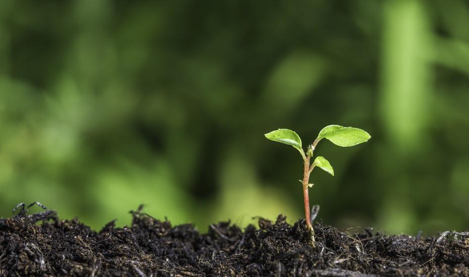 Seedling breaking through the soil