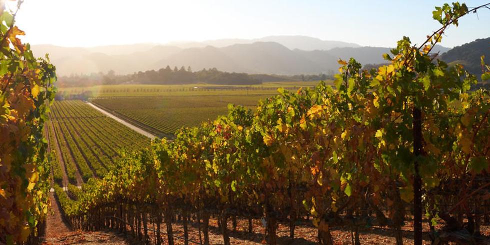 Napa Valley Wine & Yoga Retreat