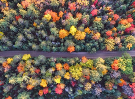 Explore Outside With These Foliage Maps