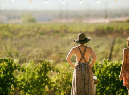 Wine Time: Napa And Sonoma