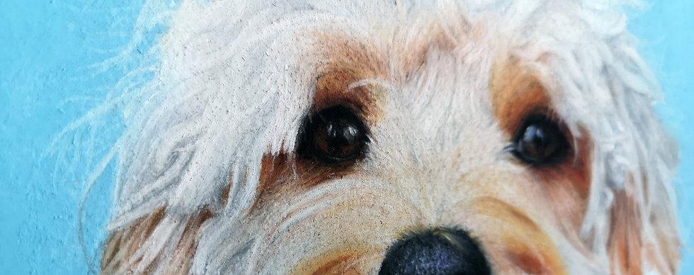 cavapoo dog pastel pet portrait close up