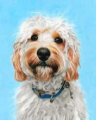 cavapoo dog pastel portrait