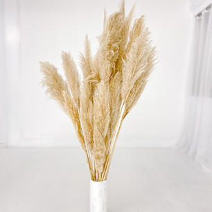 Luxe Pampas Stems