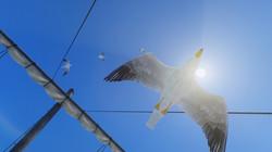 Seagulls of Skyrim