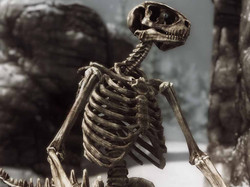 Beast Skeletons Revised (Bitter Edition)