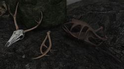 Deer Skull and Antlers Retexture