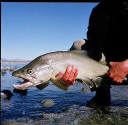 Trout fishing Twizel