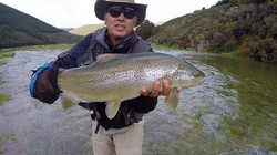 Beautiful 8lb brown trout