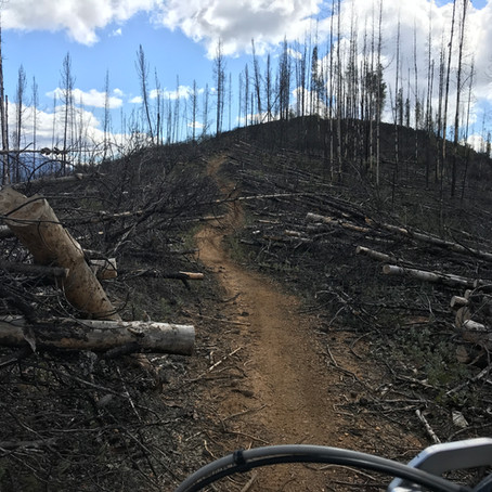Last Bastion of Unburned Trails